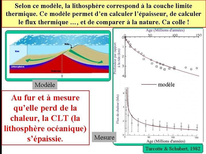 La lithosphère et les dorsales dans ce modèle