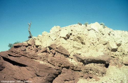 Contact entre le substratum (grès triasique rouge) et les éjectas (calcaire permien blanc) en bordure de Meteor Crater (Arizona)