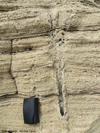 Bioturbation dans la dune fossile de la Pointe du Tuf, Sud-est de l'île de Port-Cros, Var