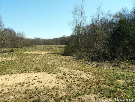 Les dunes continentales à Sermoyer (Ain)