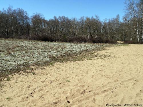 La succession écologique à l'œuvre dans les dunes de la Truchère