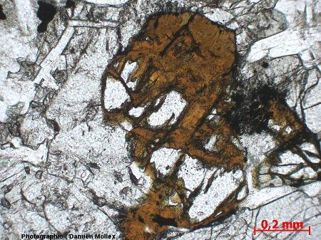 Détail de l'iddingsite dans la lame mince du filon de Brenterc'h, LPNA