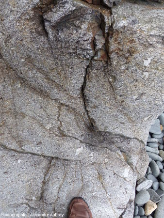 Encaissant du dyke de Brenterc'h: les gneiss de Kerhornou