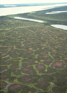 Sol polygonal observé en Yakoutie du nord près de la rivière Kolima