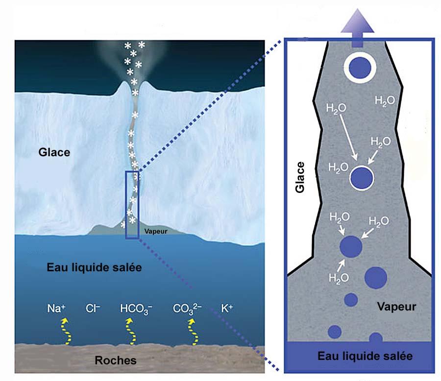 Origine des panaches à particules salées sur Encelade : modèle avec océan liquide sous-glaciaire