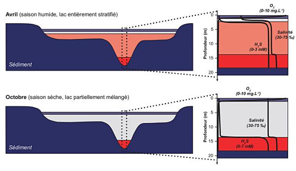 Stratification de la colonne d'eau du lac Dziani Dzaha en fonction de la saisonnalité
