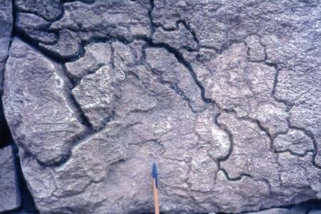 Empreintes de racine dans le calcaire, par dissolution dans la zone de production de CO2.