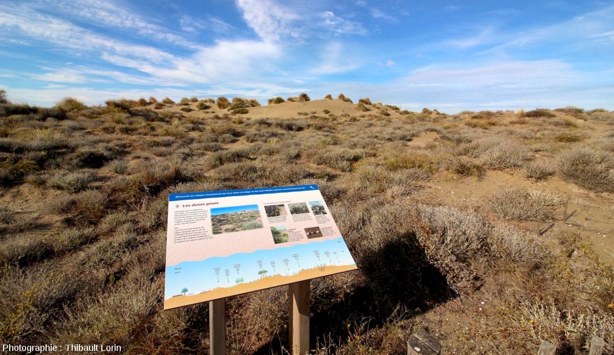 Au niveau de chaque passage permettant de rejoindre la mer (9 au total), un panneau décrit les écosystèmes traversés
