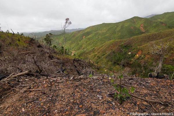 La culture sur brûlis, très pratiquée à Madagascar, explique en partie la déforestation dans le pays