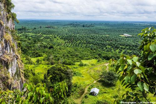 Monoculture de palmiers à huile, palmeraie à Bornéo (Indonésie)
