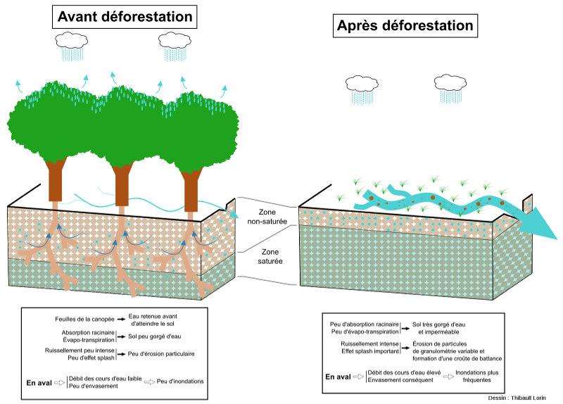 Conséquences de la déforestation et du maintien d'un sol nu sur la dynamique sédimentaire ainsi que sur les régimes d'inondations en aval