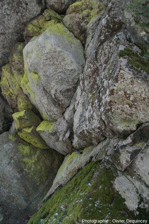 Zonation végétale dans le petit abri sous roche sous la croix du Rocher du Corbeau