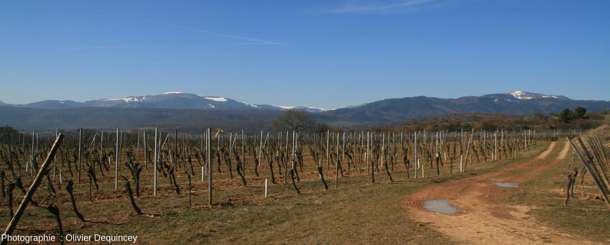 Vue sur les sommets des Vosges depuis l'entrée de la carrière du Strangenberg (Westhalten)
