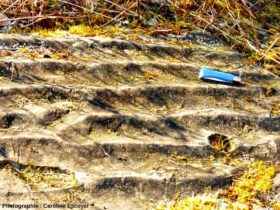 Banc gréseux à surface ondulée avec rides de longueur d'onde décimétrique