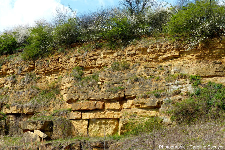 Alternances marno-calcaires avec bancs gréseux d'épaisseur variable, carrière du Strangenberg