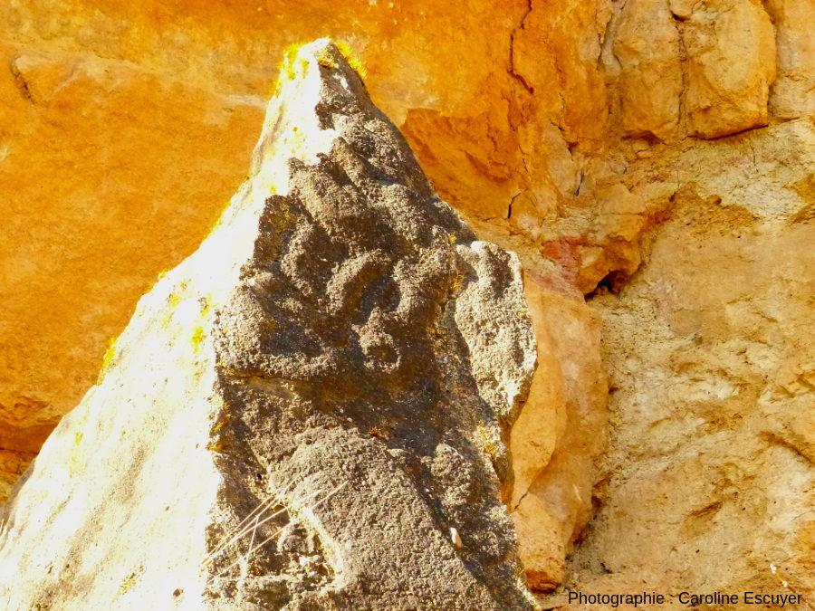 Dalle calcaire à encroûtement stromatolithiques