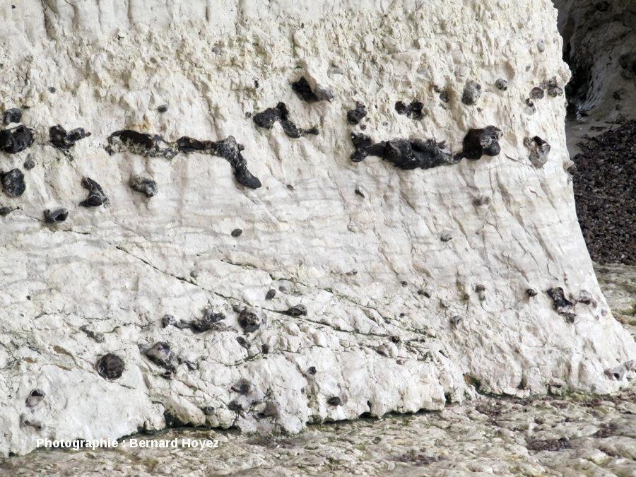 Marne flaser, assimilée à la marne Glynde1 d'Angleterre