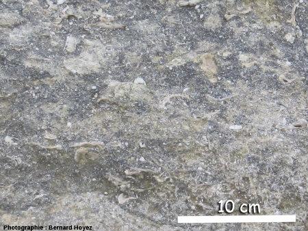 Biocalcarénites, falaise d'Amont
