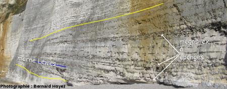 La couche à silex2, falaise d'Amont
