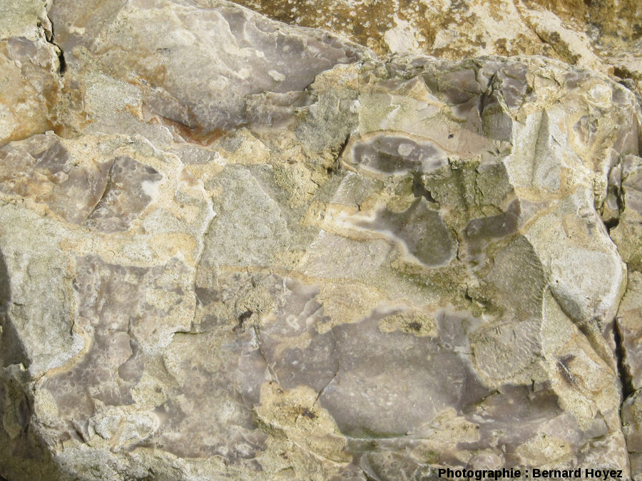 Mégasilex à éponges, falaise d'Amont