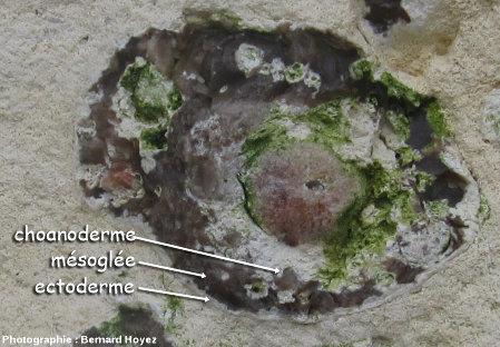 Gros plan sur un silex à structure d'éponge dans la couche slumpée, Porte d'Aval