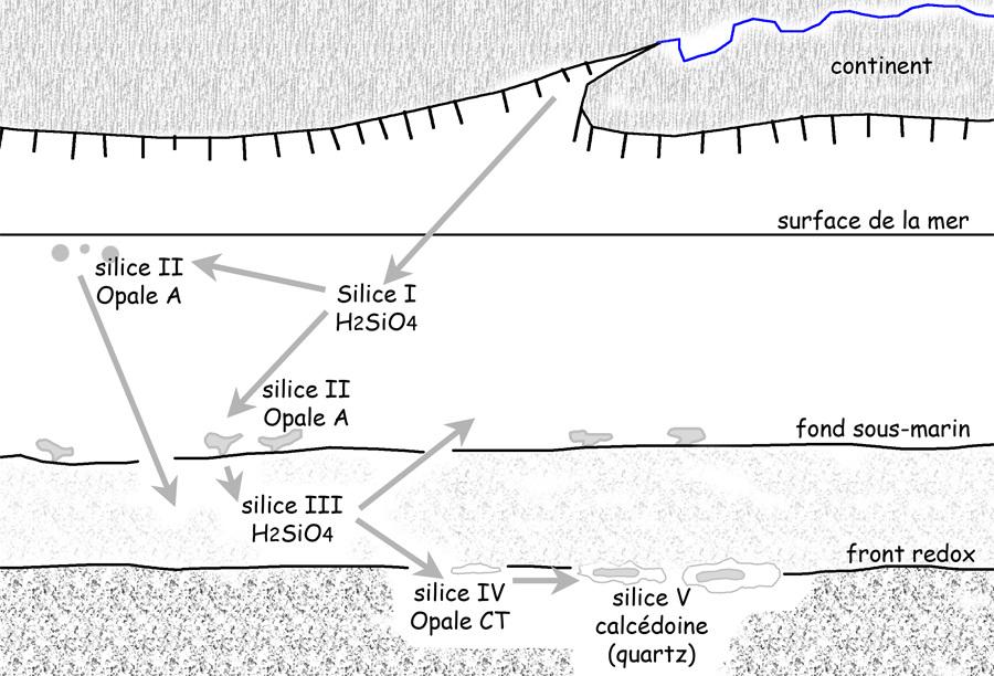 Évolution des différentes formes de la silice