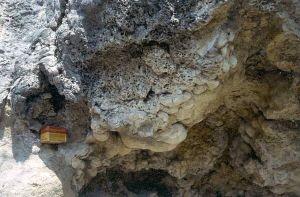 Détail de stromatolithe en boule