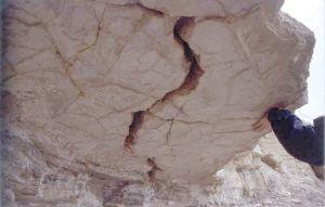 Grès calcaire à contre-empreintes de fentes de dessiccation