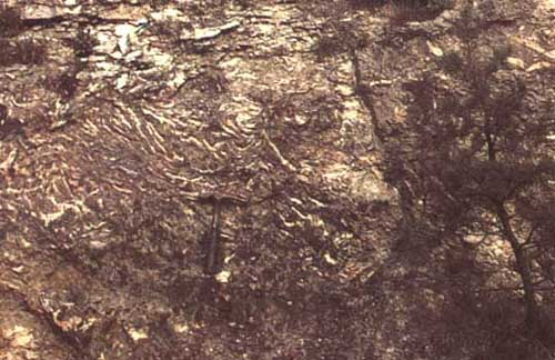 Coraux lamellaires (fossiles)