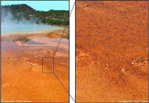 Détail des tapis bactériens sur le bord du Grand Prismatic Spring