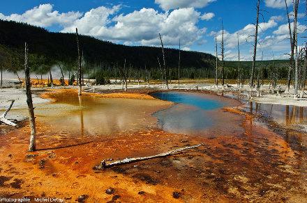 Black Bassin (parc de Yellowstone): tapis d'extrémophiles de 1 à 10cm d'épaisseur