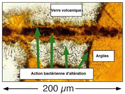 Action microbienne et altération des roches volcaniques