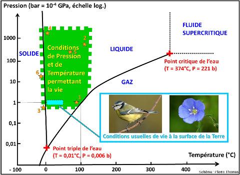 """Diagramme Pression-température ou sont figurés (1) le diagramme de phase de l'eau, (2) le domaine où existe la vie dans des conditions naturelles (les conditions de survie """"artificielles"""" comme celles dans lesquelles peuvent survivre des tardigrades ne sont pas représentées ici)"""