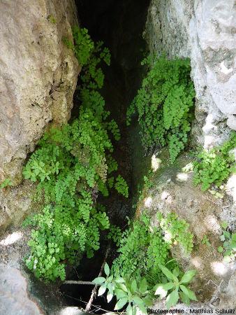 """Détail d'une petite fontaine aménagée dans le """"rocher"""" de Cotignac"""