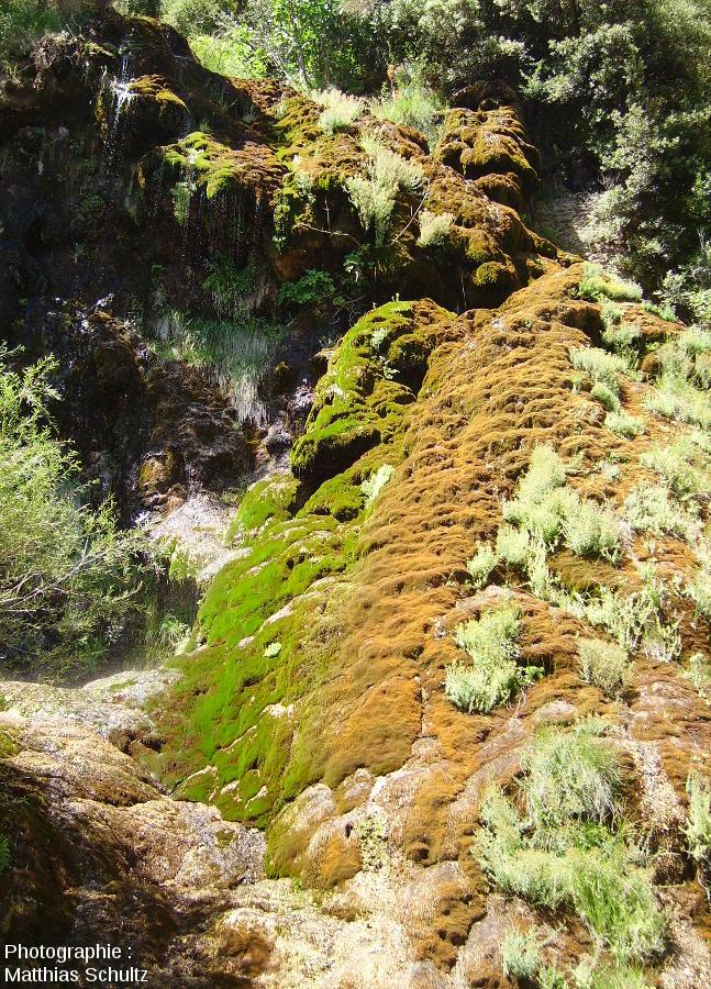 Détail de la cascade de tuf de Villecroze