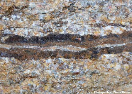 Détail du petit filon de sidérite (Fe2O3) recoupant un granite