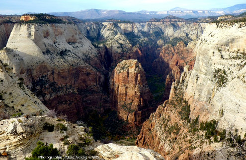 Les grès Navajo dans le secteur d'Angels Landing, Parc national de Zion, Utah