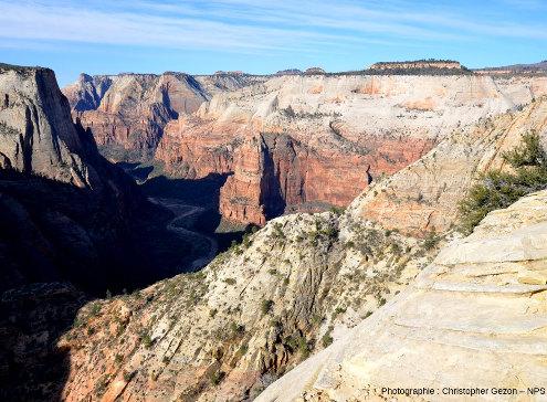 Les grès Navajo dans le secteur du canyon de Zion, Parc national de Zion, Utah
