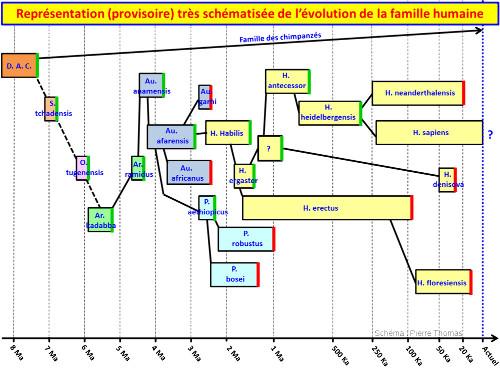 Schéma très simplifié et forcément provisoire de l'évolution de la famille humaine