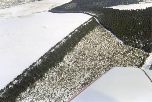Vue aérienne de la forêt du Cézallier