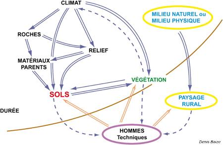 Schéma simplifié des relations entre les sols et les différents facteurs de pédogenèse
