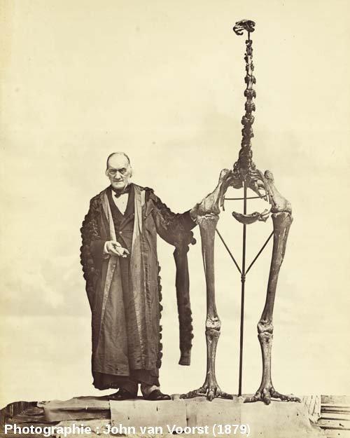 Richard Owen posant à côté du plus grand squelette de moa, Dinornis giganteus (robustus)
