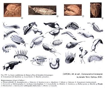 Fossiles classiques du site de Burgesss