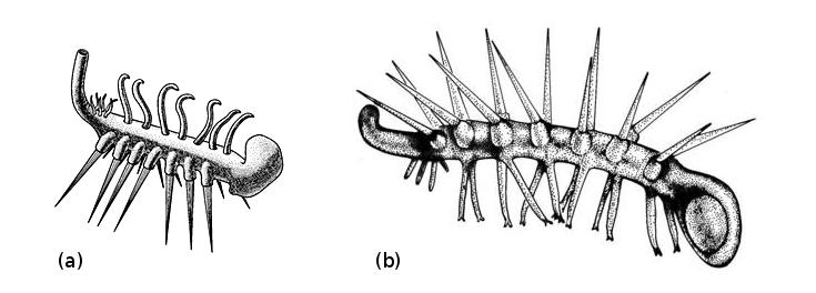 Hallucigenia, avant et après les découvertes de Chengjiang