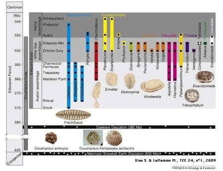 Distribution temporelle (barres verticales) et apparition stratigraphique (disques noirs) des genres représentatifs de la faune d'Ediacara