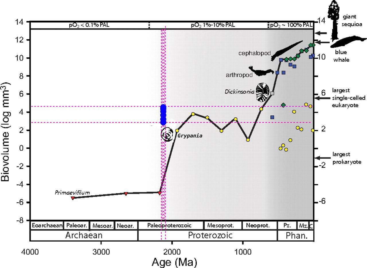 Taille des plus grands fossiles au cours de l'histoire de la Terre, depuis 1,9 Ga