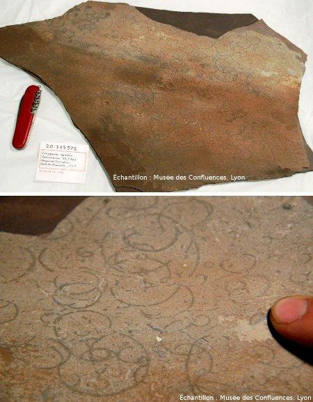 Vues globale et détaillée sur une dalle à Grypania datant de 2,1Ga et venant du Nord du Minesota (USA)