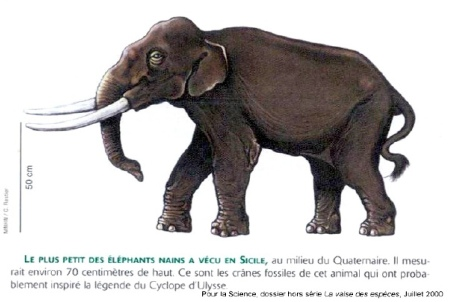 Éléphant nain de Sicile
