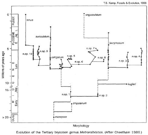 """Évolution selon le modèle des """"équilibres ponctués"""" pour le genre de Bryozoaires Metrarabdotos"""
