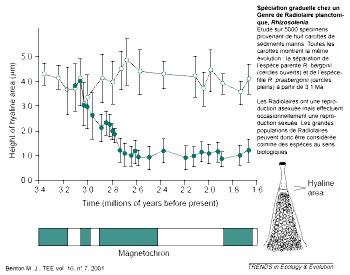 Exemple de spéciation (apparition de deux espèces à partir d'une espèce ancestrale) mise en évidence dans un genre de Radiolaires fossiles (Protozoaires à test siliceux)